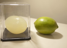Lemon and its Agar casting